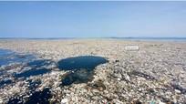'Vùng chết' lan rộng khắp các đại dương