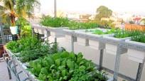 Bí quyết trồng  và chăm sóc rau trên sân thượng