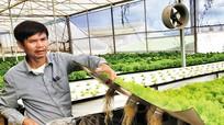 Trồng rau trên không đạt lợi nhuận 3 tỉ đồng/ha/năm
