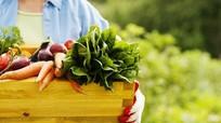 """""""Nguyên tắc 6 không"""" trong sản xuất rau hữu cơ"""