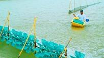 Cách nhận biết màu nước tốt, xấu trong ao nuôi thủy sản