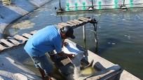 7 kinh nghiệm xử lý ao nuôi thủy sản sau mưa lũ