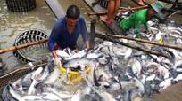 Cơ hội của tôm, cá tra, cá ngừ Việt Nam từ cuộc chiến thương mại Mỹ - Trung
