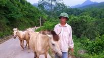 Về nơi nuôi bạch mã nhiều nhất Việt Nam
