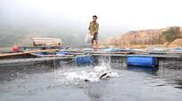 Nghệ An: Hỗ trợ 10 triệu đồng/ha nuôi trồng thủy sản bị thiệt hại do thiên tai