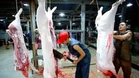Cục Thú y: Lợn ở vùng dịch được giết mổ, tiêu thụ tại chỗ có kiểm soát