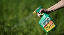 Tại sao chưa cấm thuốc trừ cỏ gây ung thư tại Việt Nam?