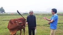 Thu phí chăn trâu, bò: HTX đi ngược chủ trương của Đảng