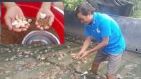 Trộn tỏi vào thức ăn cho ếch, chàng trai kiếm gần nửa tỷ đồng mỗi năm