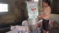 Nữ phóng viên bỏ phố về quê nuôi lợn, thả gà làm giàu