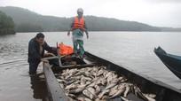 Bắt hàng tấn cá khi hồ thủy lợi xả nước