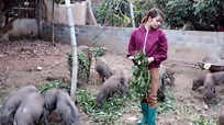 Gái xinh 9X bỏ công nhân về quê lập nghiệp, nuôi lợn rừng