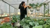 Mê mẩn với vườn rau xanh mơn mởn của nữ giảng viên trên 60 m2 sân thượng