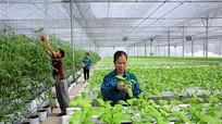"""Hết thời """"xin-cho"""" trong đầu tư vào nông nghiệp"""