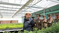 Nông thôn Triều Tiên dưới thời ông Kim Jong - un