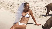 Người đẹp quần vợt mặc bikini chụp ảnh với lợn trên bãi biển