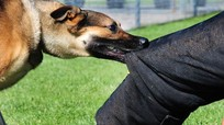 Nam sinh tử vong do chó dại cắn trước thềm năm học mới