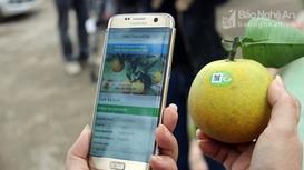 Nghệ An hỗ trợ đưa hộ sản xuất nông nghiệp lên sàn thương mại điện tử