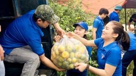 Nghệ An: Được giải cứu hàng tấn quýt, người dân bớt cảnh đứng ngồi không yên