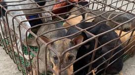 Bắt giữ đối tượng câu trộm gần 100kg chó mang đi tiêu thụ
