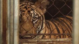 Video Công an Nghệ An 'tập kích' cơ sở xây hầm kín, nuôi nhốt 17 cá thể hổ