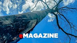 Phía sau những vụ phá rừng ở Bắc Sơn (Quỳ Hợp)