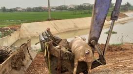 Xác lợn, rác thải 'bức tử' môi trường kênh mương ở Nghệ An?