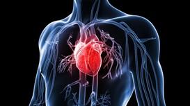 nCoV làm tổn thương trái tim thế nào?