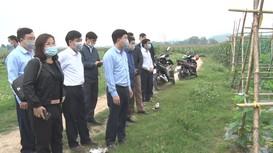 Lãnh đạo huyện Anh Sơn kiểm tra sản xuất đầu năm