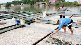 Hàng chục tấn cá chết nổi trắng sông Đồng Nai