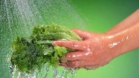 Cách chọn rau không tồn dư hóa chất độc hại