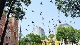 Những tuyến vỉa hè đẹp ở trung tâm Sài Gòn