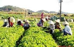 Cử tri kiến nghị về tình trạng rớt giá nông sản