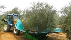 Cỗ máy rung cây tốc độ cao để thu hoạch trái cây
