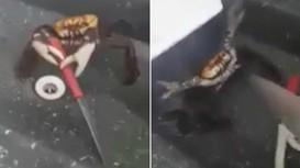 Lạ kỳ: Con cua biết kẹp dao chống trả đầu bếp