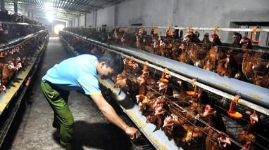 Hội nghị trực tuyến tổng kết chính sách hỗ trợ nâng cao hiệu quả chăn nuôi nông hộ