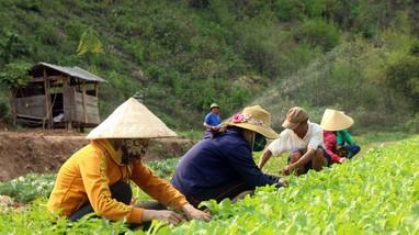 Thầy cô giáo ở Nghệ An trồng rau, nuôi gà hỗ trợ bữa ăn cho học sinh bán trú