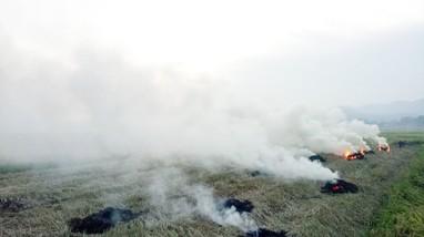 Nghệ An: Làng quê ngột ngạt khói rơm rạ đốt trên các cánh đồng