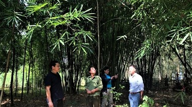Gần 840 ha lùng ở Quế Phong được cấp chứng chỉ quản lý rừng bền vững