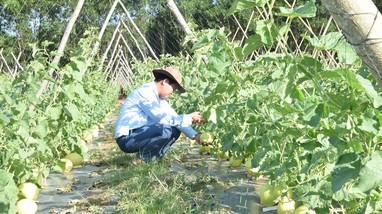 Nghệ An có 196 hợp tác xã liên kết tiêu thụ sản phẩm nông nghiệp