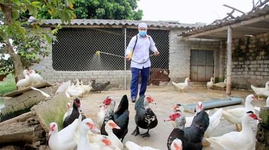 Công điện khẩn về triển khai các giải pháp kiểm soát phòng, chống bệnh cúm gia cầm
