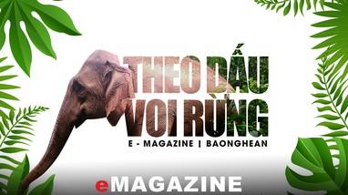 Theo dấu voi rừng