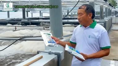 Nuôi tôm bằng tảo xoắn cho thu nhập khủng ở Nghệ An