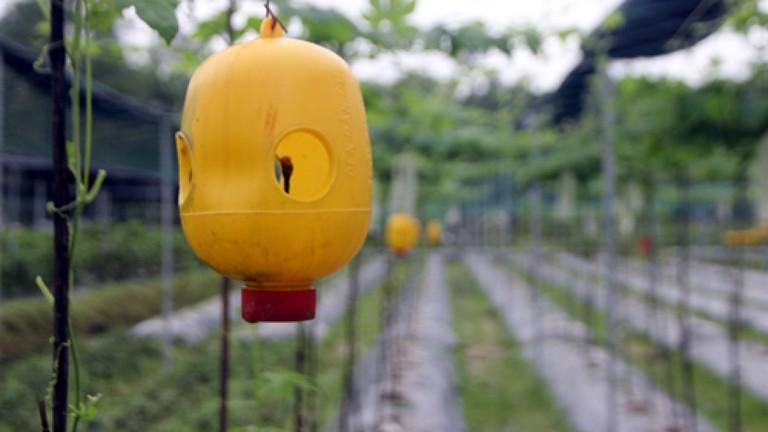 Dùng bình nhựa diệt côn trùng gây hại cho quả