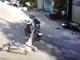 Nhóm cướp giật kéo ngã xe của một phụ nữ mang thai trên đường