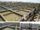 Các cơ quan báo chí đề nghị có ngay kết luận cụ thể về chất lượng nguồn nước sông Đào