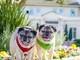 Các 'sao' cún cưng nổi nhất mạng xã hội