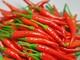 Trồng ớt cay chỉ thiên thu lãi trên 200 triệu/ha