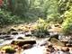 Khám phá vẻ  hoang sơ rừng nguyên sinh Pù Hoạt