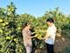 Chuyển hướng mạnh về nông nghiệp sạch